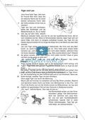 Unterrichtsbeispiele: Erzähl- und Sachtexte am Beispiel einer Tierkartei: Arbeitshinweise und Arbeitsblätter Preview 15