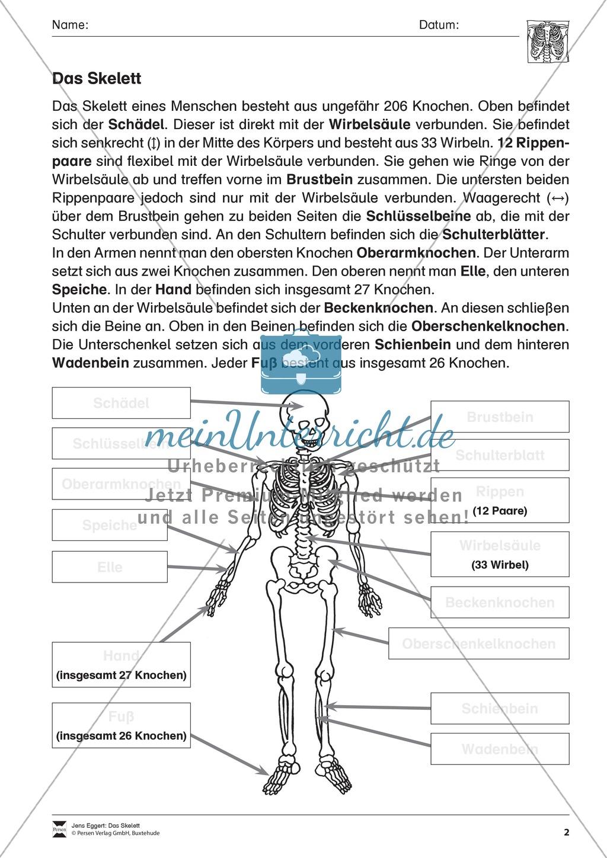 Körper und Gesundheit: Aufgaben + Lesetext + Lückentext - meinUnterricht