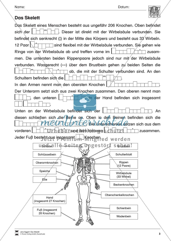 Körper und Gesundheit: Aufgaben + Lesetext +  Lückentext Preview 3