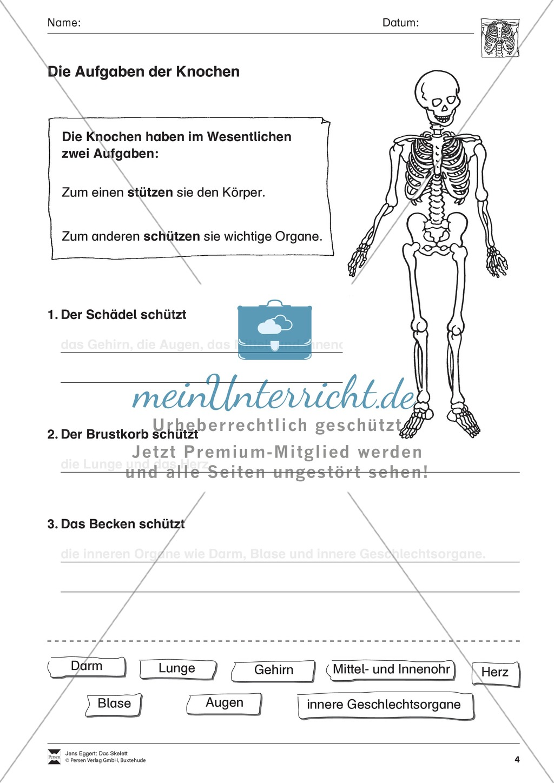 Körper und Gesundheit: Aufgaben + Lesetext +  Lückentext Preview 4