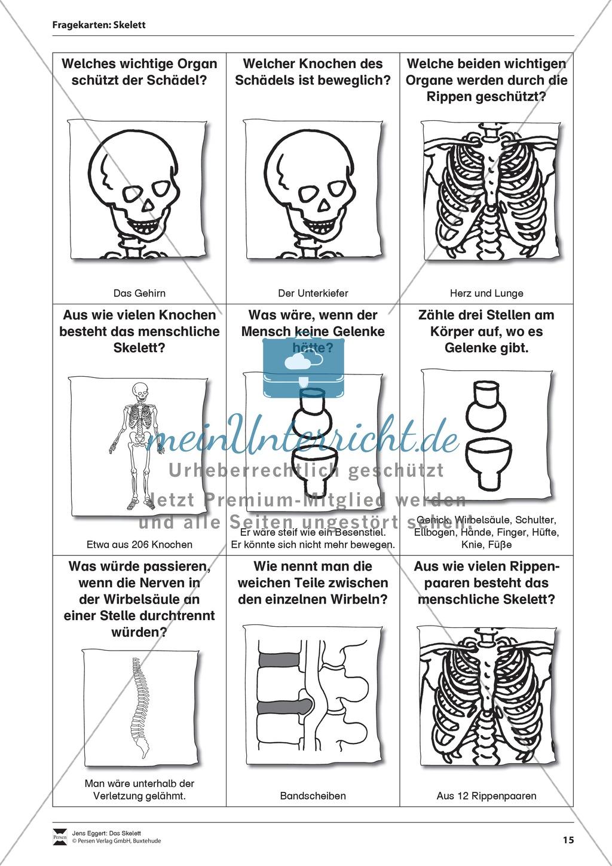 Körper und Gesundheit: Aufgaben + Fragekarten Preview 0