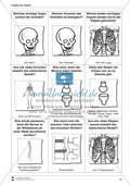 Körper und Gesundheit: Aufgaben + Fragekarten Preview 1