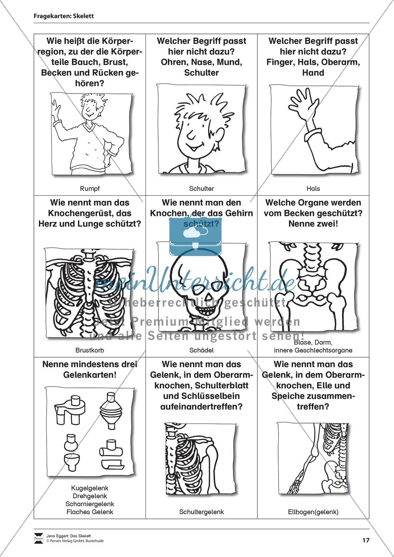 Körper und Gesundheit: Aufgaben + Fragekarten Preview 3