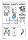 Körper und Gesundheit: Aufgaben + Fragekarten Preview 4