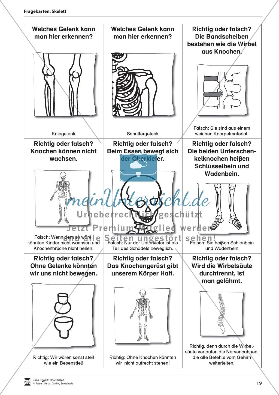 Körper und Gesundheit: Aufgaben + Fragekarten Preview 5