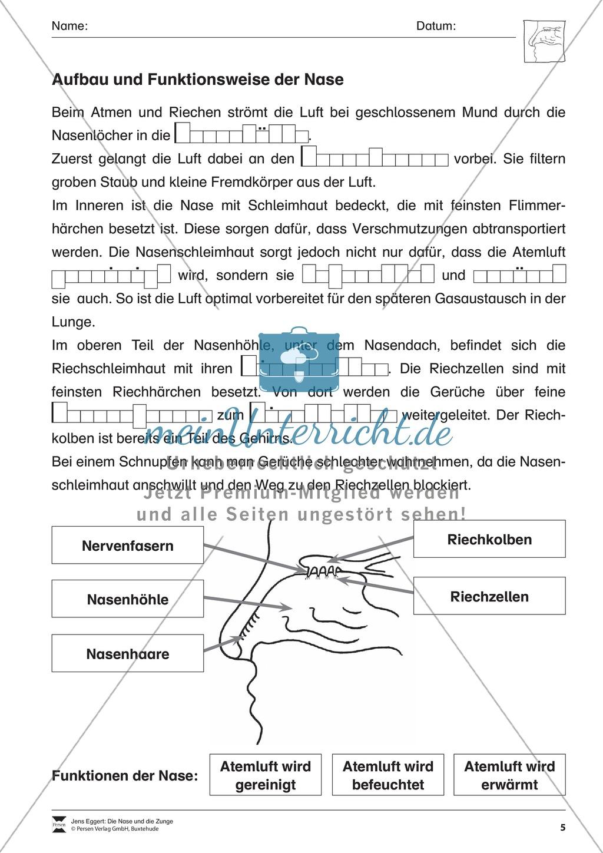Gemütlich Funktionen Der Nasenhöhle Bilder - Anatomie Ideen ...