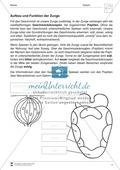 Aufbau und Funktion der Zunge: Arbeitsblätter Preview 1