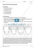 Aufbau und Funktion der Zunge: Arbeitsblätter Preview 2