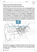 Aufbau und Funktionsweise eines Sinns: Arbeitsblätter und Lösungen Preview 1