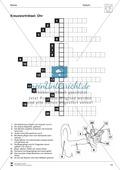 Kreuzworträtsel Ohr: Arbeitsblatt Preview 1