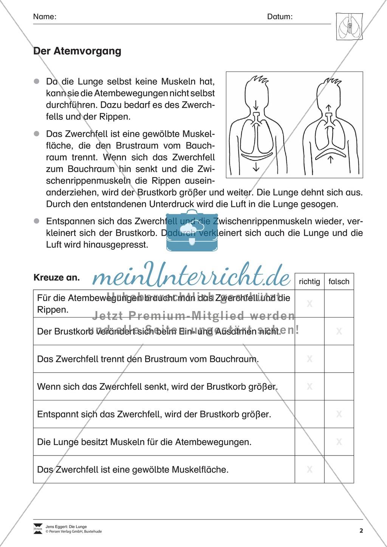 Arbeitsblatt Lunge Und Atemwege : Der atemvorgang Überblick und Übung meinunterricht