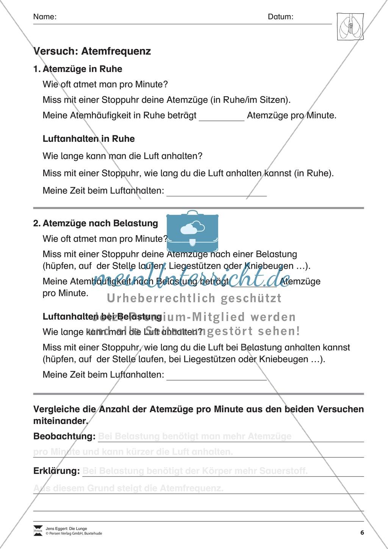 """Versuch """"Atemfrequenz"""": Arbeitsbogen Preview 1"""