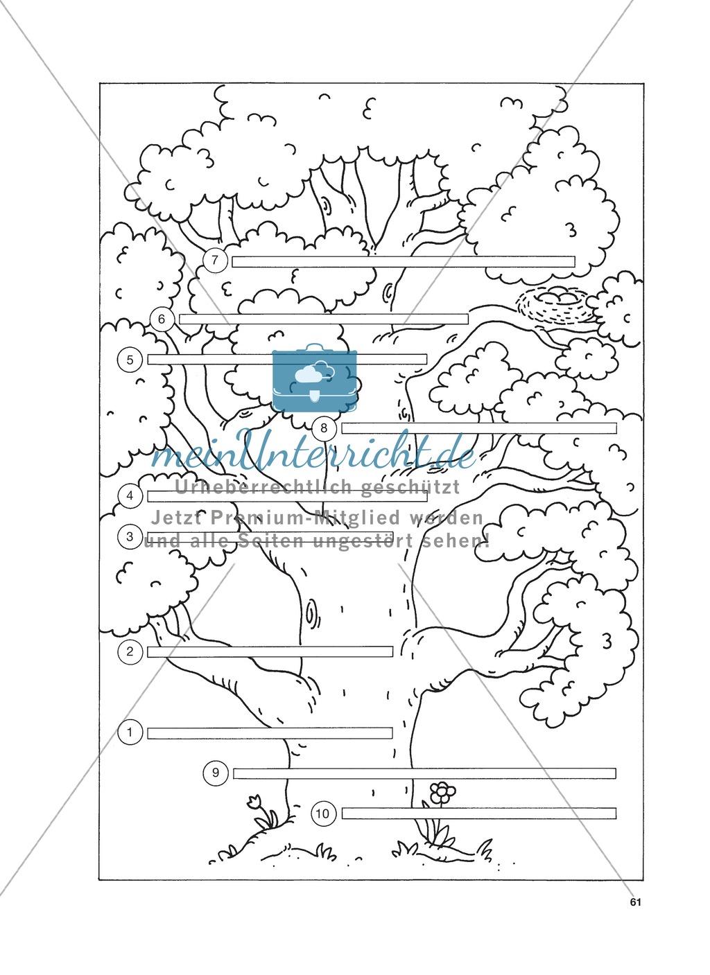 Reizwortgeschichte - Jutta, Vogelnest, ...: Unterrichtsgestaltung, Zuordnungsplan, Übungs- und Kontrollkarten Preview 4
