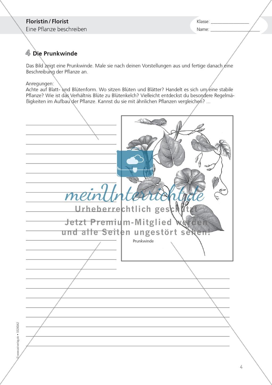 Berufe - Florist / in: Pflanze beschreiben - Aufgaben + Hilfe Preview 0