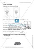 Lesekompetenz: Synonyme: Wörter mit ähnlicher Bedeutung finden: Arbeitsblätter und Lösungen Preview 2