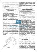 Aufgaben zur Silbe einschließlich Wortkonzept: Übungen, Spiele und Kopiervorlagen Preview 4