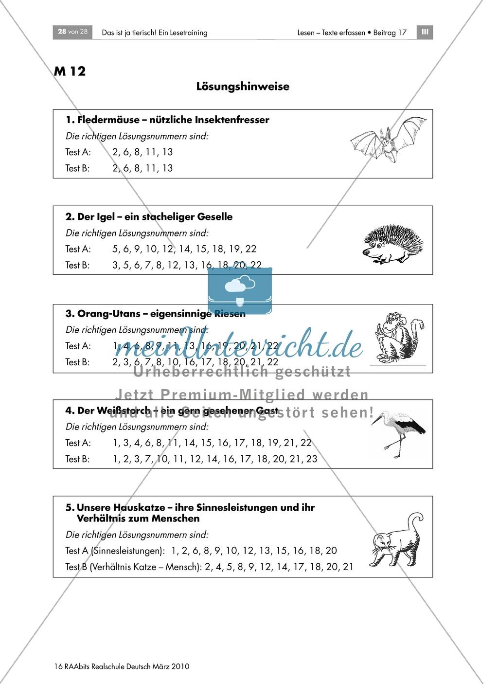 Leseübungen anhand von Sachtexten über Tiere: Thema Störche Preview 5