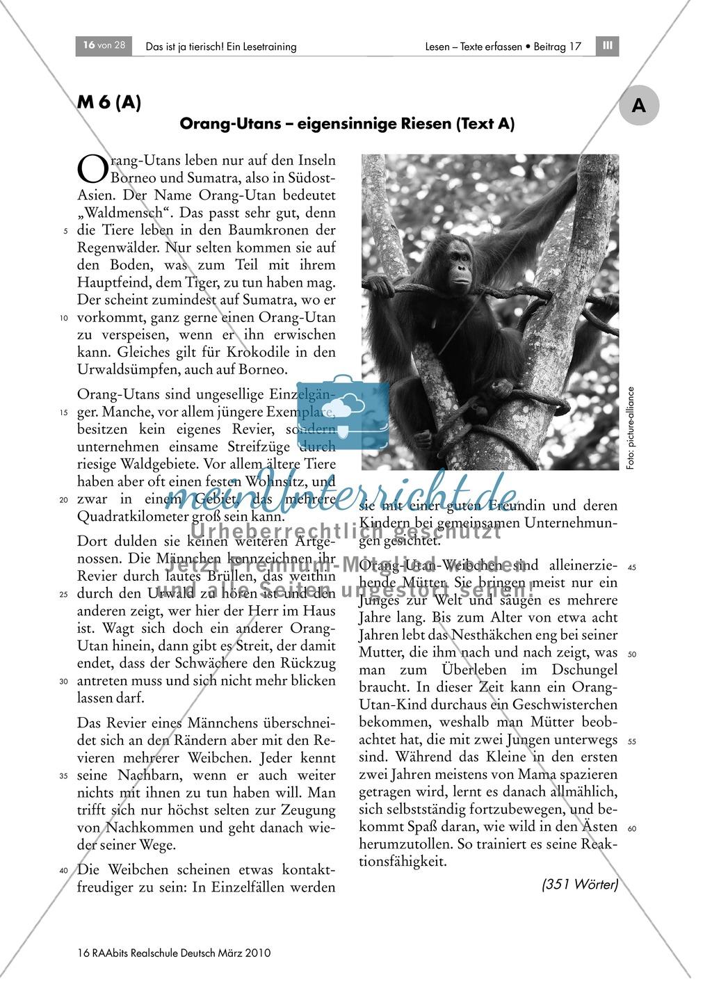 Leseübungen anhand von Sachtexten über Tiere: Thema Orang-Utans Preview 1
