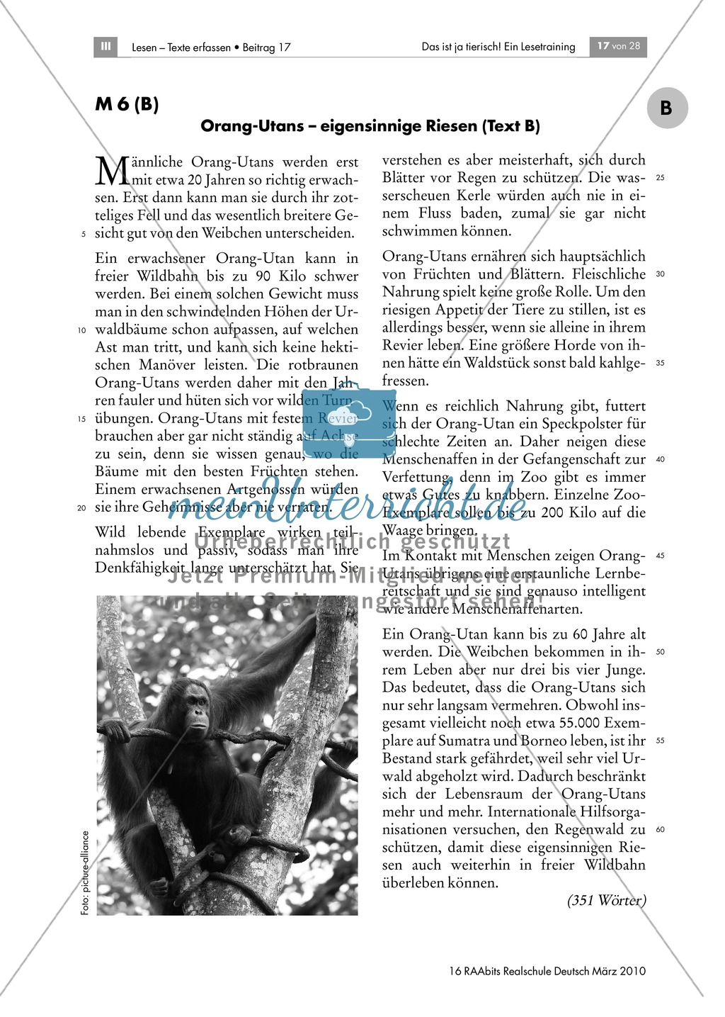 Leseübungen anhand von Sachtexten über Tiere: Thema Orang-Utans Preview 2