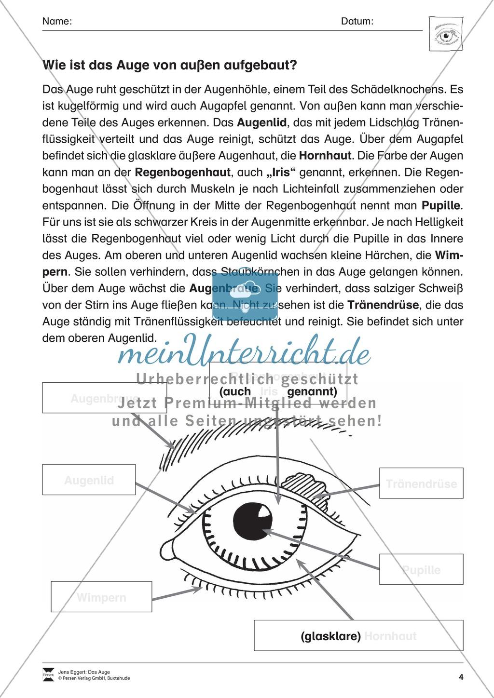 Der äußere Aufbau des Auges Preview 0
