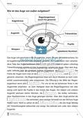 Der äußere Aufbau des Auges Preview 2