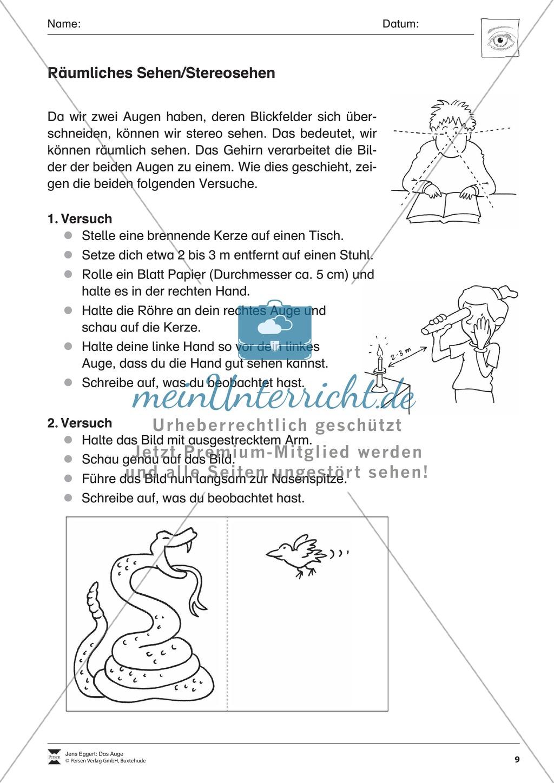 Wie funktioniert das Sehen + Gefahren für das Auge Preview 3