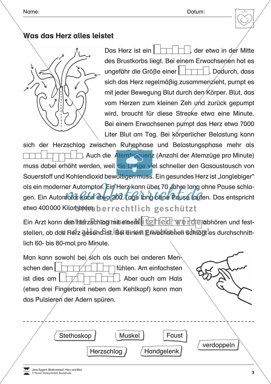 Blutkreislauf und Herz Preview 2