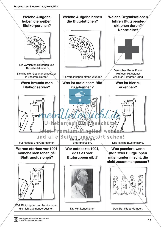 Fragekarten zum Thema Blutkreislauf, Herz und Blut Preview 2