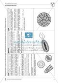 Krankheitserreger (Virus und Bakterium) Thumbnail 0