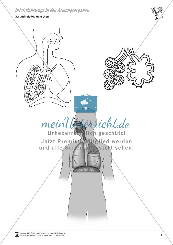 Infektionswege in den Atmungsorganen Preview 1