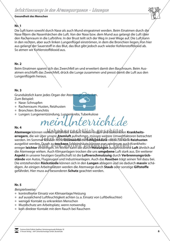 Infektionswege in den Atmungsorganen Preview 3