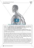 Material für Vertretungsstunden: Herz-Kreislauf-Erkrankungen Preview 1