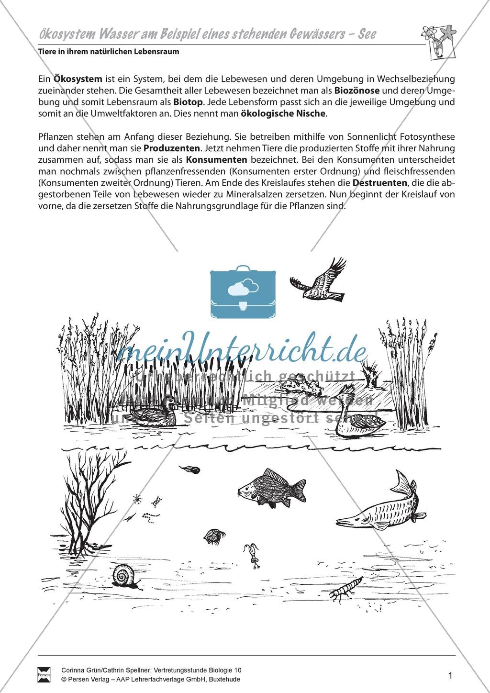 Ökosystem Wasser am Beispiel eines stehenden Gewässers- See ...