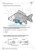 Fische Preview 2