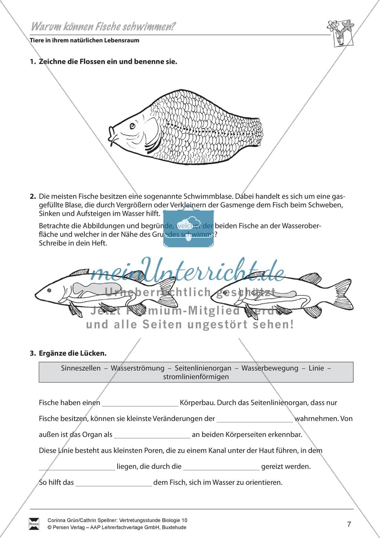 Warum können Fische schwimmen? - meinUnterricht