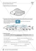 Warum können Fische schwimmen? Preview 2