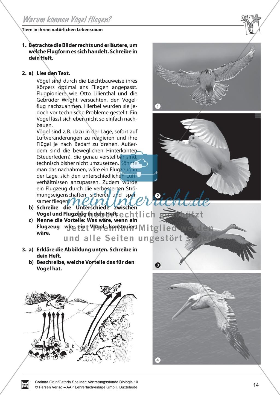 Warum können Vögel fliegen? - meinUnterricht