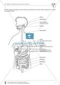 Biologie, Bau und Funktion von Biosystemen, Biosysteme im Stoff- und Energiefluss, Humanbiologie, Ernährung, Organ, humanbiologie