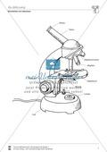 Biologie, kompetenzorientiert, naturwissenschaftliche Denk- und Arbeitsweisen, Mikroskopieren