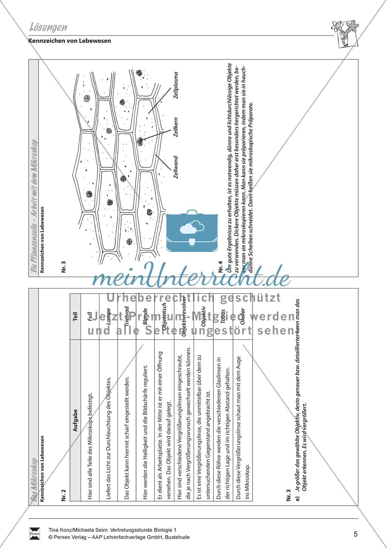 Pflanzenzelle: Zellgewebe der Zwiebel, Zwiebelhaut unterm Mikroskop - Vertretungsstunde Preview 3