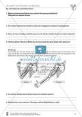 Bau und Funktion des menschlichen Körpers: Gelenke und Muskeln, Scharniergelenk, Kugelgelenk, Beuger, Strecker - Vertretungsstunde Preview 2