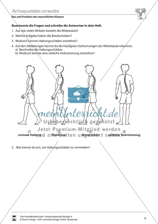 Bau und Funktion des menschlichen Körpers: Wirbelsäule, Körperhaltung - Vertretungsstunde Preview 1