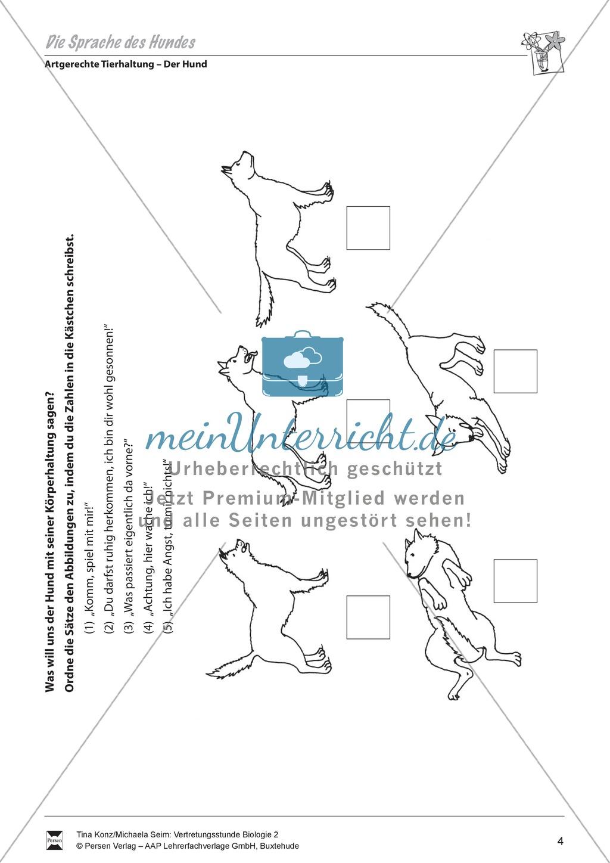 Artgerechte Tierhaltung: Die Sprache des Hundes: Körperhaltung - Vertretungsstunde Preview 0
