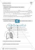 Blut, Blutkreislauf und Atmung: Der Weg der Atemluft, Gasaustausch - Vertretungsstunde Preview 3