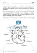 Blut, Blutkreislauf und Atmung: Bau des Herzens, Pulsschlag - Vertretungsstunde Preview 1
