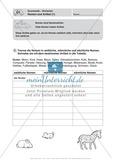 Führerschein für die deutsche Sprache in der 4. Klasse: Stationenübungen für die Bearbeitung des Fahrschultestes. Preview 5