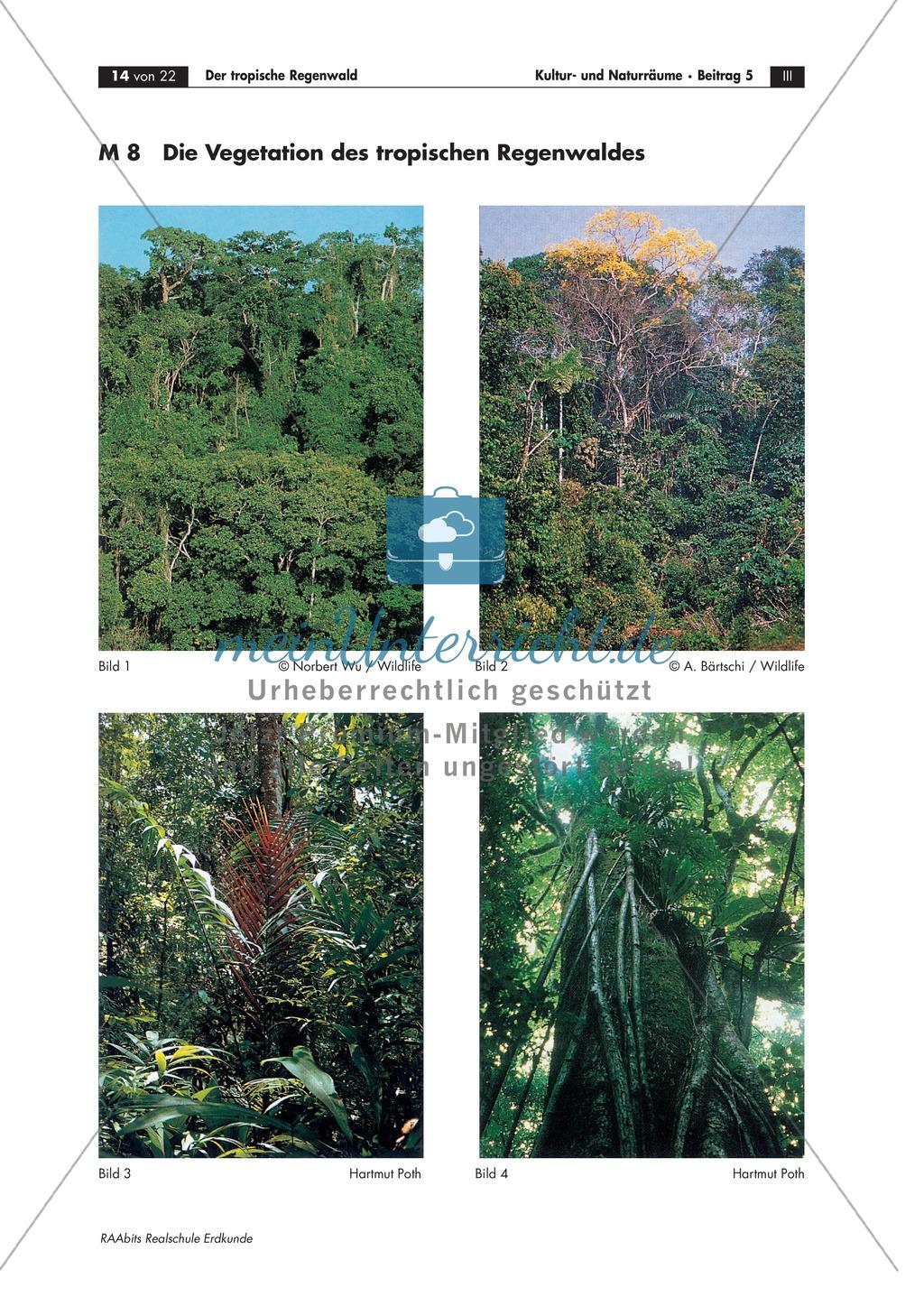 Der tropische Regenwald: Vegetation + Böden + Nährstoffkreislauf Preview 2
