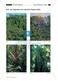 Der tropische Regenwald: Vegetation + Böden + Nährstoffkreislauf Thumbnail 2