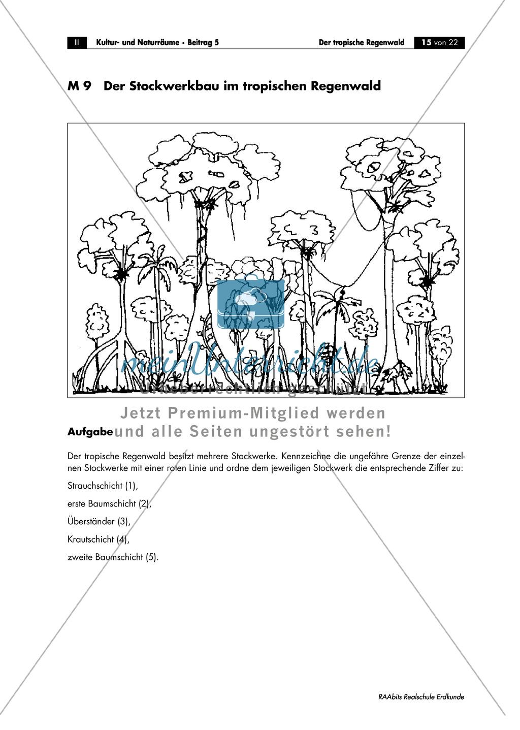 Der tropische Regenwald: Vegetation + Böden + Nährstoffkreislauf Preview 3