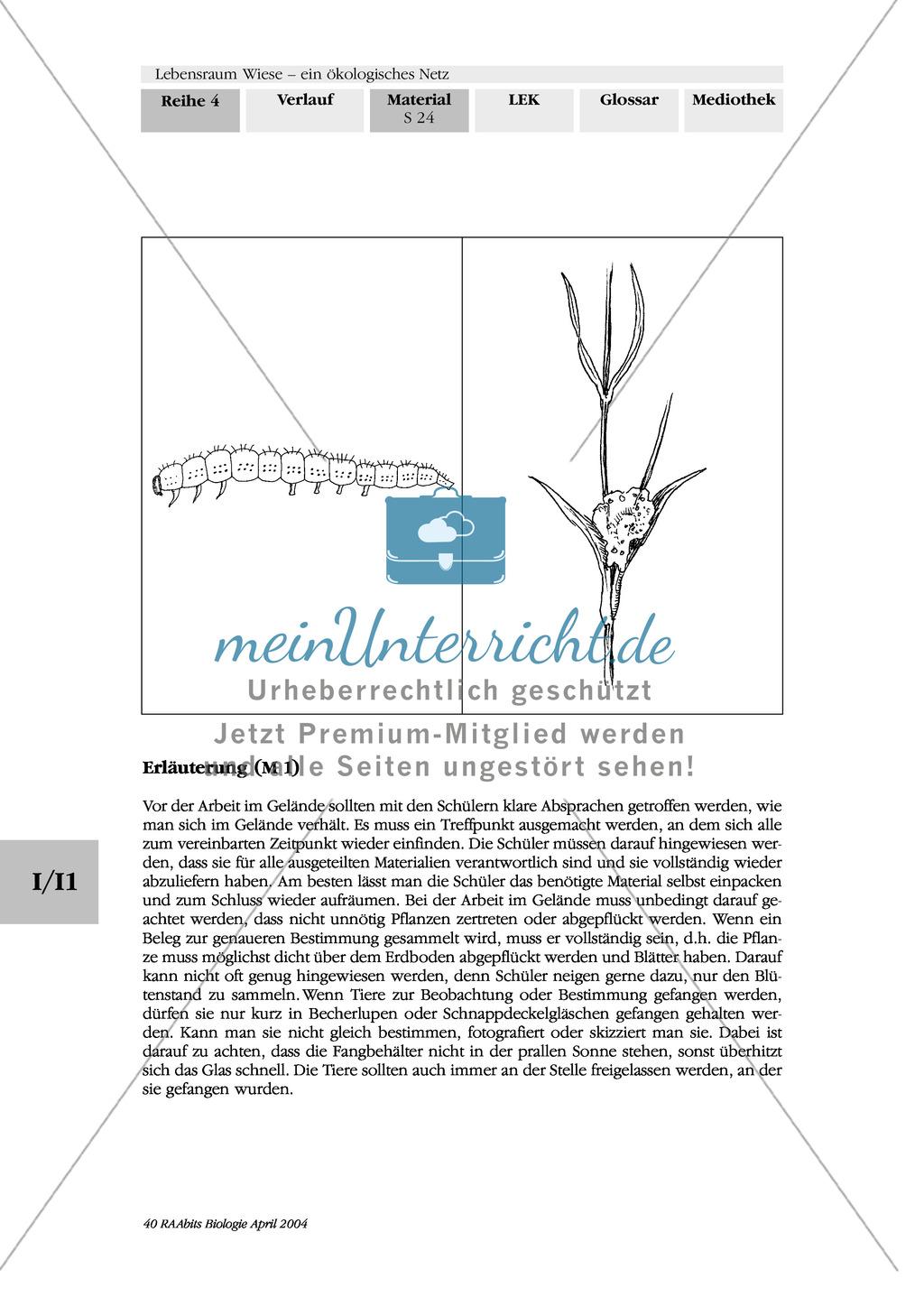 Lebensraum Wiese: Suchaufgaben zum Kennenlernen der Wiese Preview 3